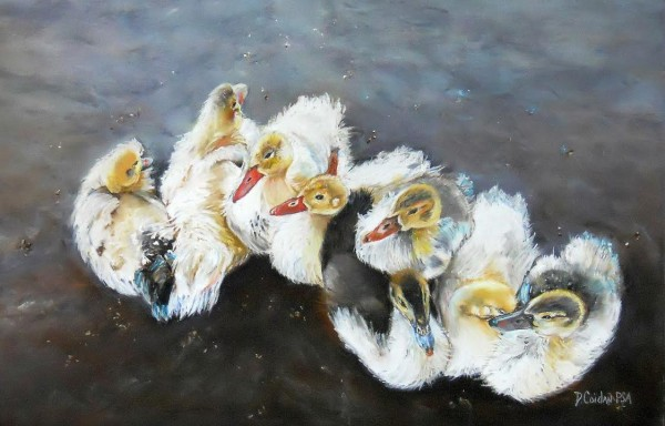 Diana Coidan Ducks